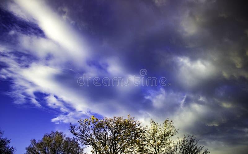 Cimes d'arbre et ciel images libres de droits