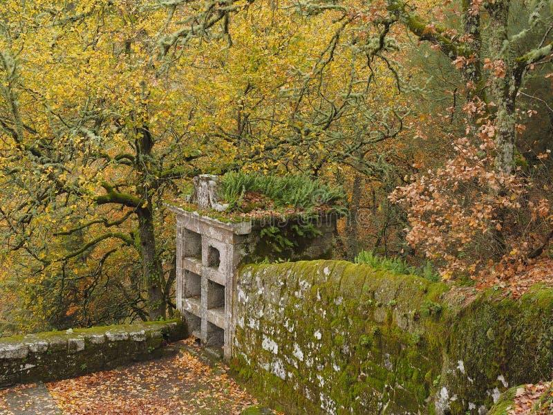 Cimitero medievale nella foresta immagine stock libera da diritti