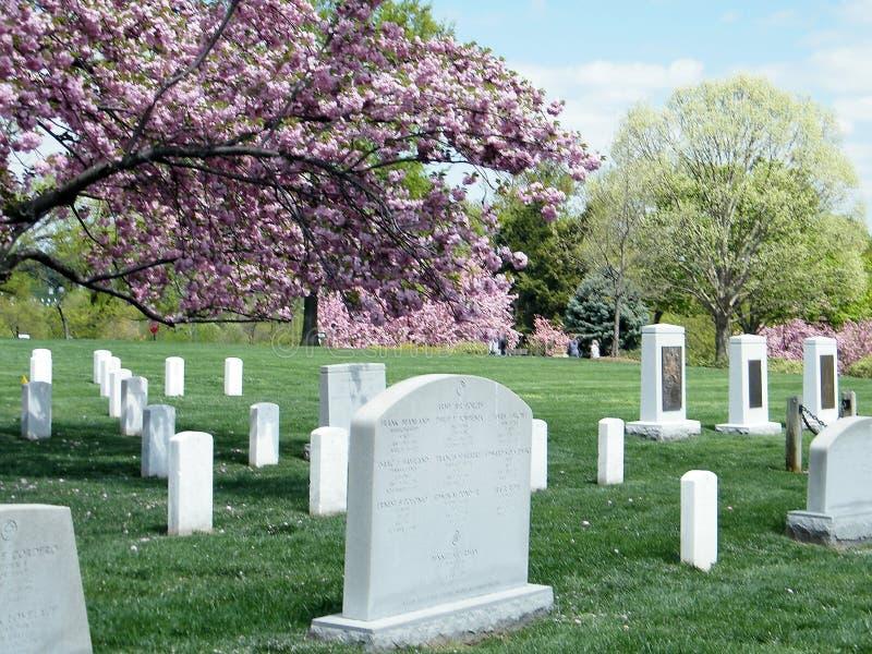 Cimitero sakura di Arlington vicino allo sfidante ed al memoriale di Colombia fotografia stock