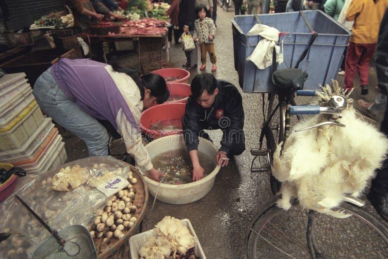 CINA CANTON GUANGZHOU MERCATO DEGLI ANIMALI fotografia stock libera da diritti