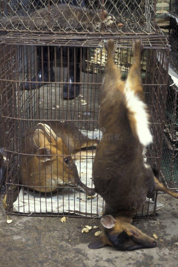 CINA CANTON GUANGZHOU MERCATO DEGLI ANIMALI fotografia stock