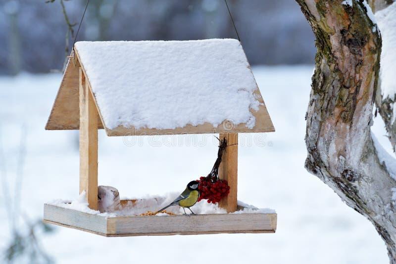 Cinciarella che mangia dall'alimentatore dell'uccello del giardino fotografie stock