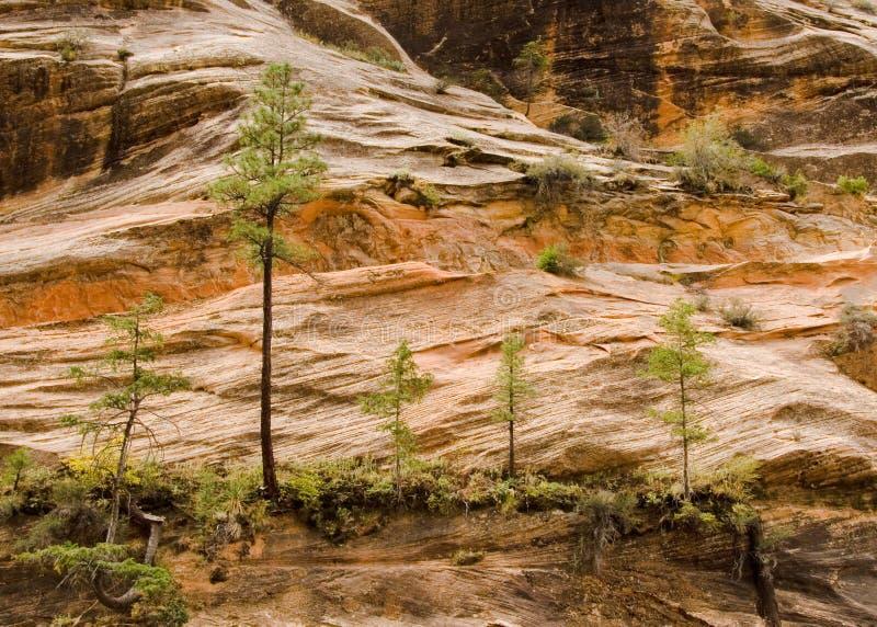 Cinco árvores fotos de stock royalty free