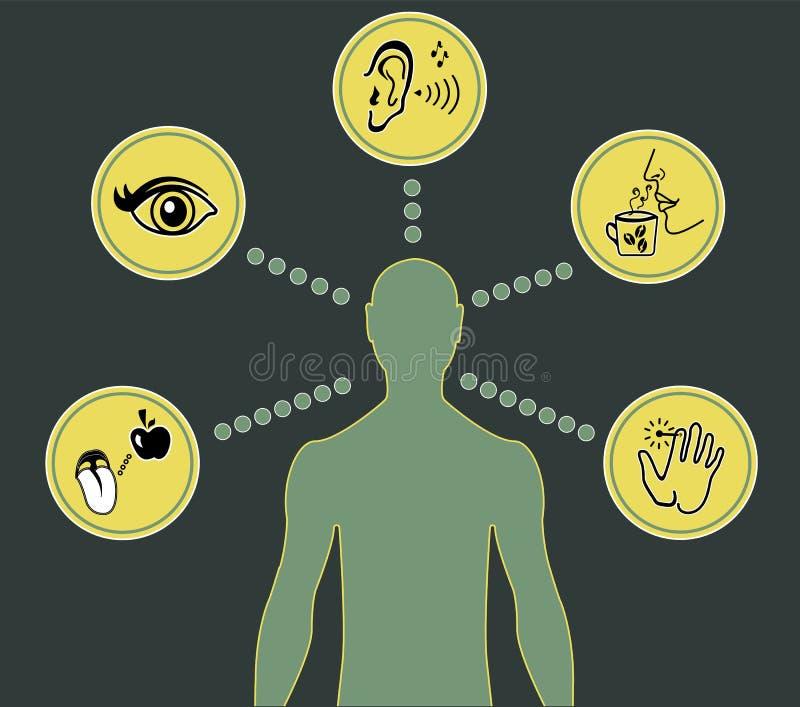 Cinco ícones dos sentidos ilustração do vetor