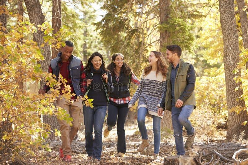 Cinco amigos que apreciam uma caminhada em uma floresta, Califórnia, EUA imagens de stock