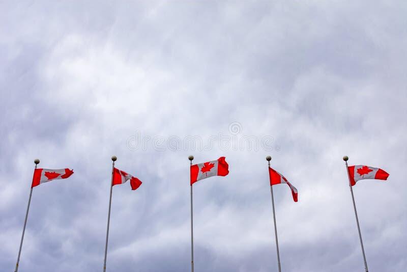 Cinco bandeiras canadenses em Polos que batem no vento em um dia nebuloso imagens de stock royalty free