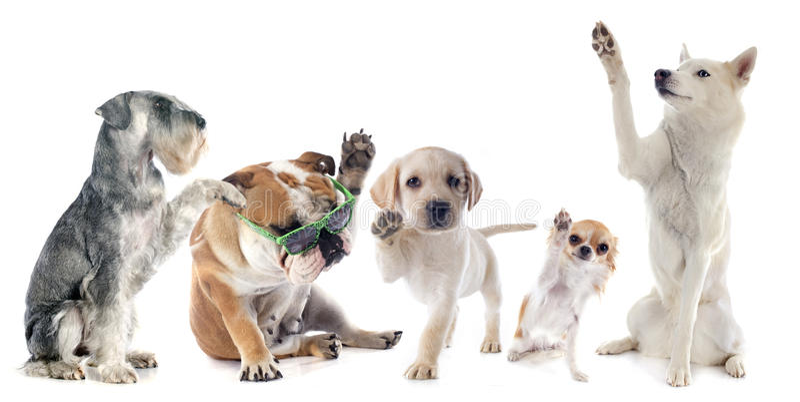 Cinco cães fotografia de stock royalty free