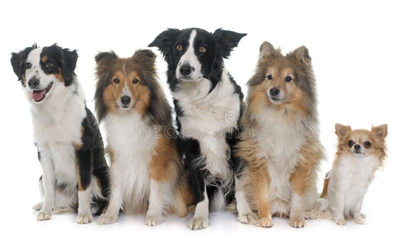 Cinco cães bonitos fotografia de stock
