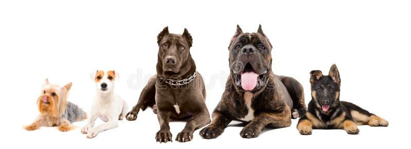 Cinco cães das raças diferentes que encontram-se junto imagens de stock
