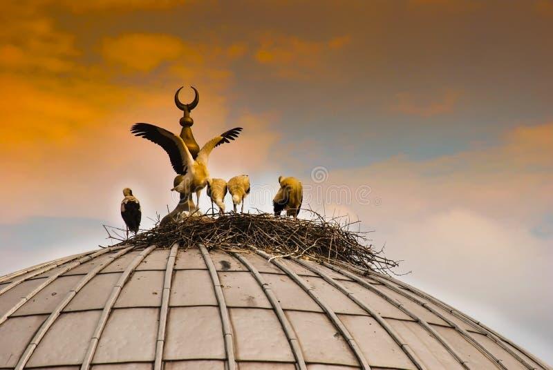 Cinco cegonhas em um ninho da cegonha na abóbada de uma mesquita em Turquia foto de stock