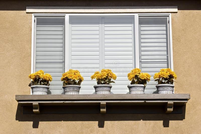 Cinco crisoles de flor fotografía de archivo