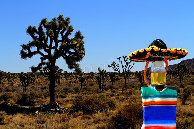 Cinco de Mayo ölflaska på Joshua Tree, Kalifornien arkivbild