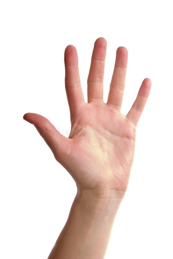 Cinco dedos fotos de stock royalty free