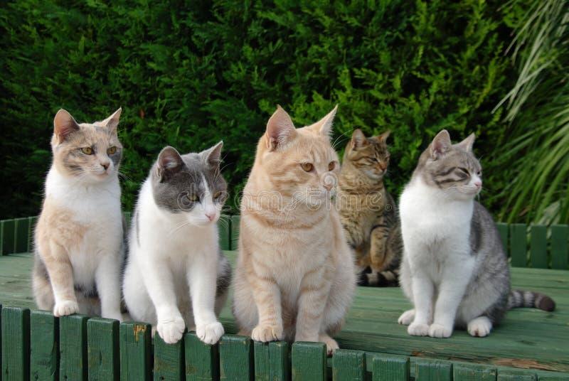 Cinco gatos coloridos que esperan imagen de archivo libre de regalías