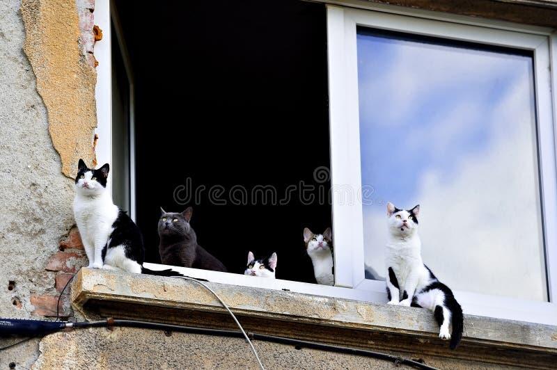 Cinco gatos en travesaño de la ventana fotos de archivo libres de regalías