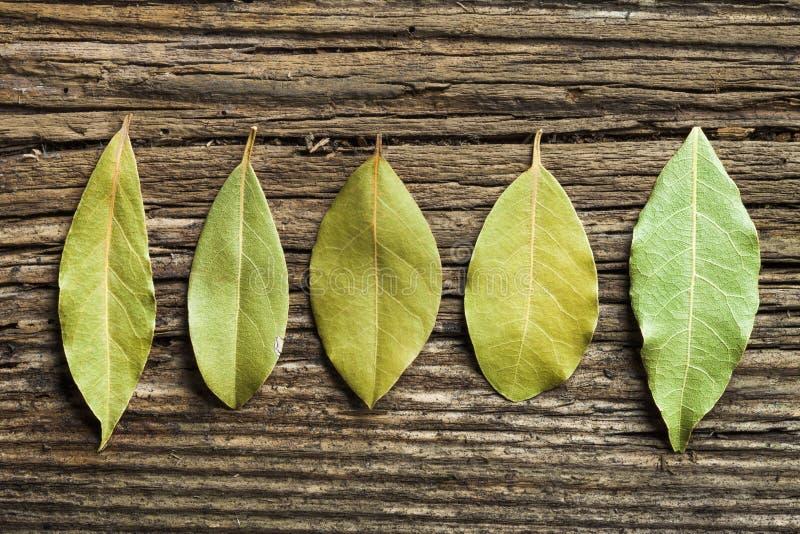 Cinco hojas del laurel imagen de archivo libre de regalías