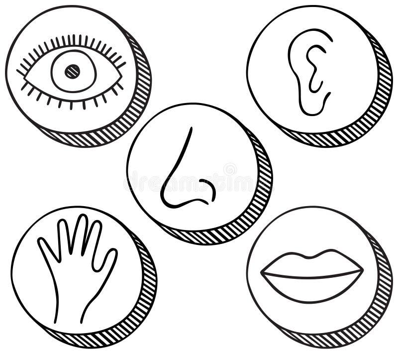 Cinco iconos de los sentidos ilustración del vector