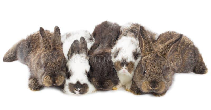 Cinco pequeños conejos imagenes de archivo