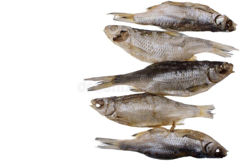Cinco pescados salados secados de la cucaracha en un fondo blanco aislado fotografía de archivo