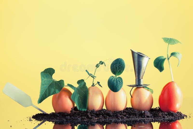 Cinco plantas orgânicas da plântula nas cascas de ovo no fundo amarelo fotos de stock
