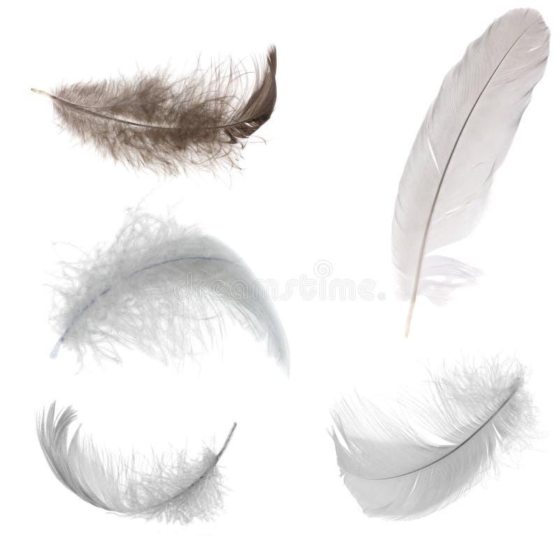Cinco plumas blancos y negros fotografía de archivo libre de regalías