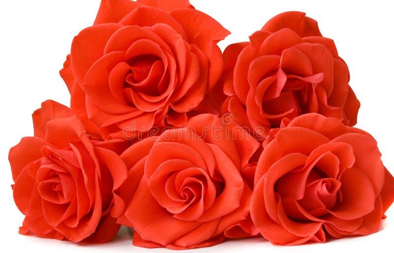Cinco rosas foto de stock royalty free