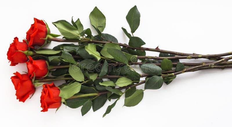 Cinco rosas vermelhas suculentas em hastes longas no fundo branco foto de stock