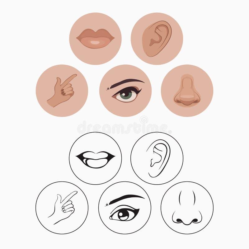 Cinco sentidos, libre illustration