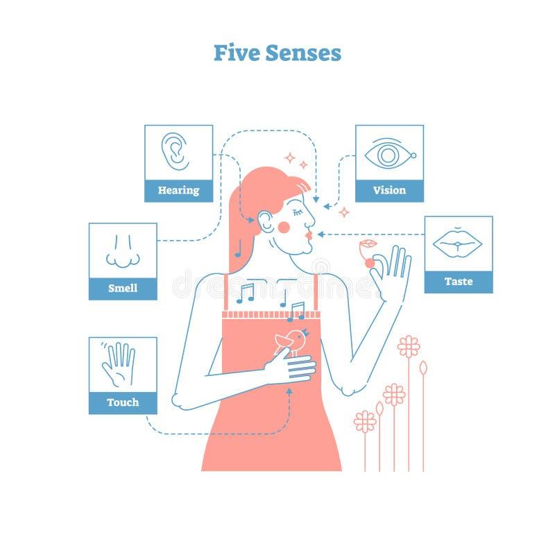 Cinco sentidos humanos, cartel artístico conceptual del ejemplo del vector del diseño gráfico del estilo del esquema con la hembr ilustración del vector