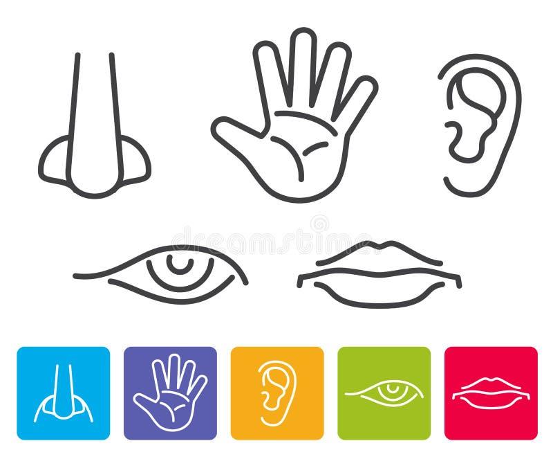 Cinco sentidos humanos huelen, ven, oyendo, gusto, iconos del vector del tacto ilustración del vector