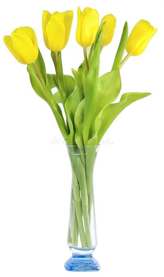 Cinco tulipanes amarillean color en florero fotos de archivo
