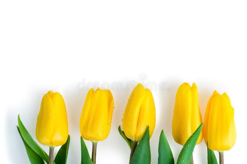 Cinco tulipanes cubiertos con descensos del agua mienten en fila fotos de archivo libres de regalías