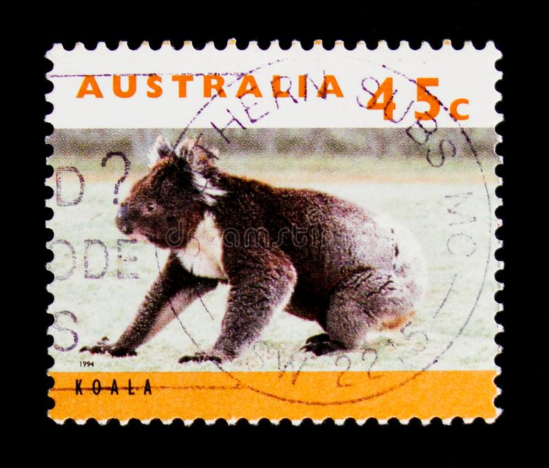 Cinereus do Phascolarctos da coala, serie dos cangurus e das coalas, cerca de 1994 imagem de stock royalty free