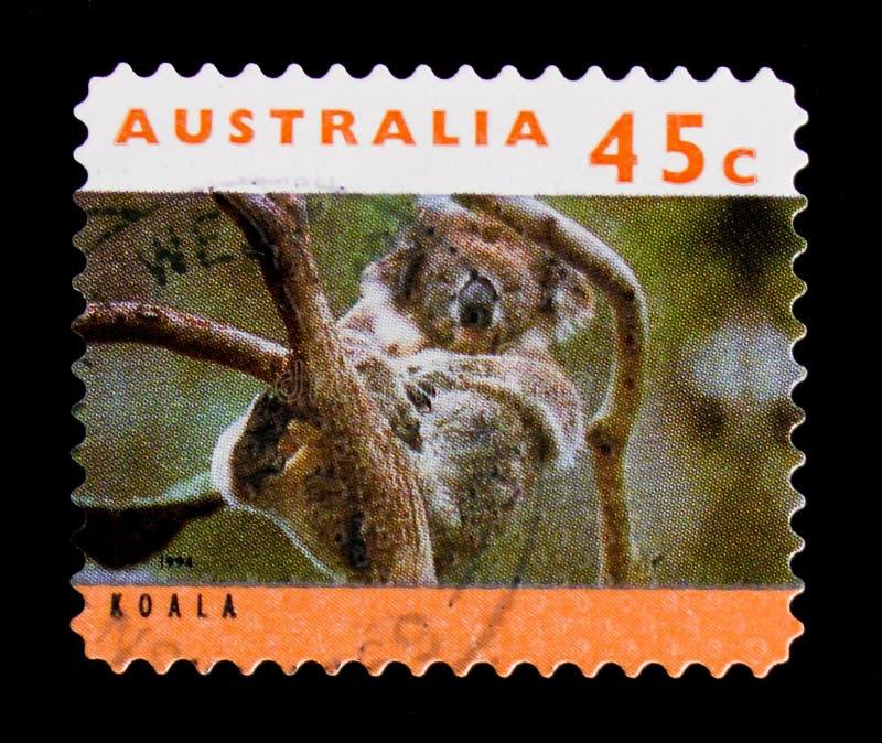Cinereus do Phascolarctos da coala, serie dos cangurus e das coalas, cerca de 1994 imagens de stock royalty free