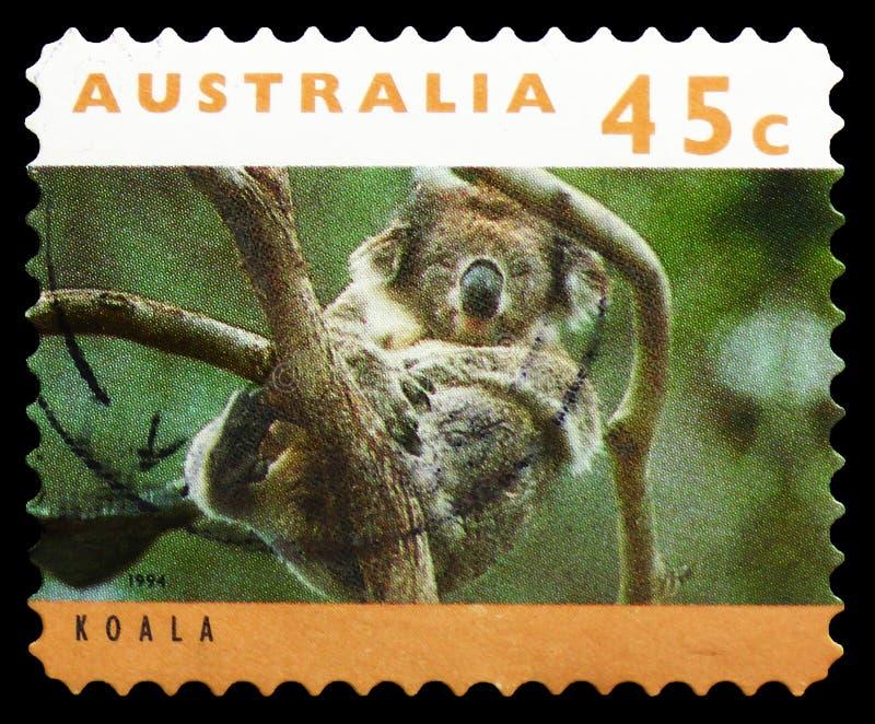 Cinereus do Phascolarctos da coala, serie dos cangurus e das coalas, cerca de 1994 imagem de stock