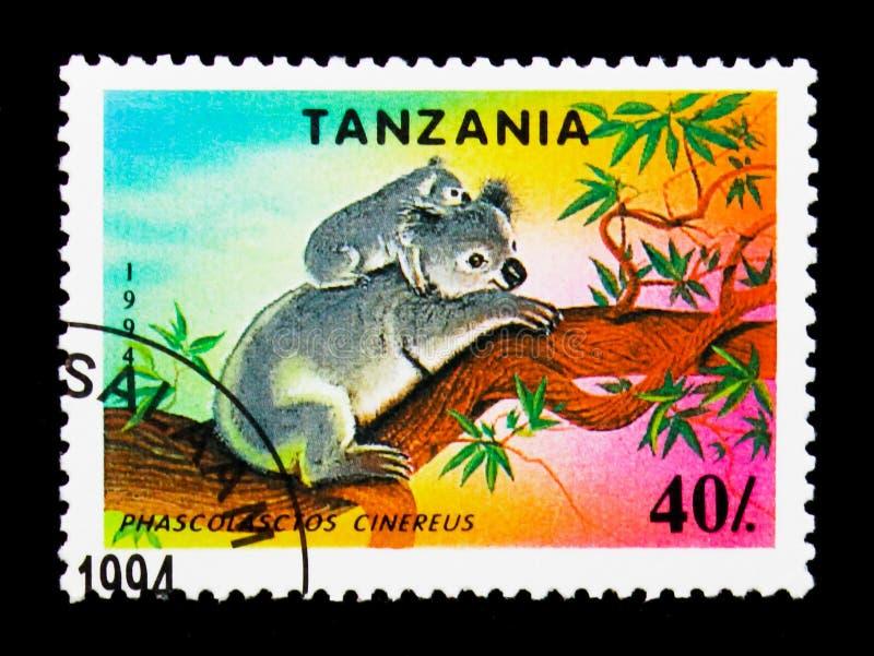 Cinereus do Phascolarctos da coala, serie da espécie em vias de extinção, cerca de 1994 imagens de stock royalty free