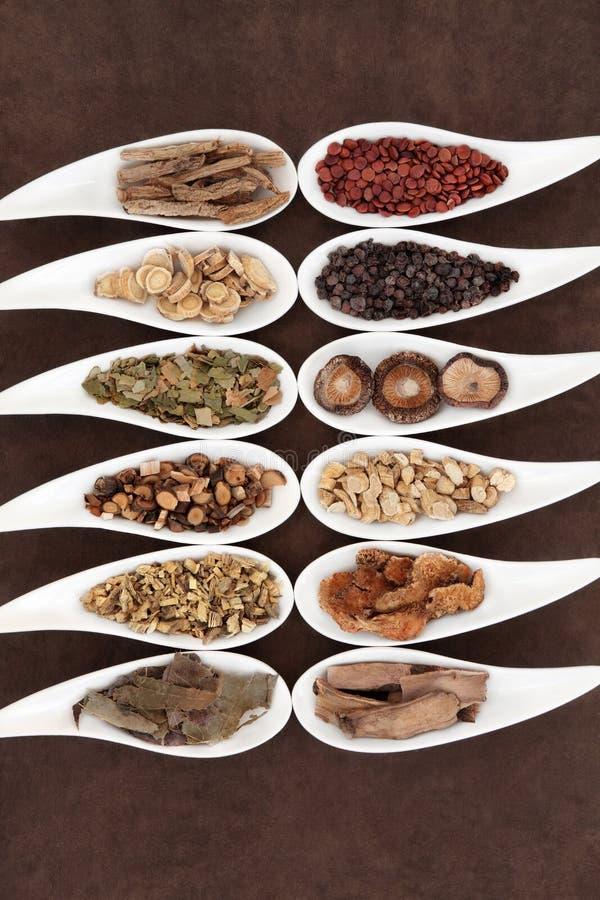 Cinese Yang Herbs immagine stock libera da diritti