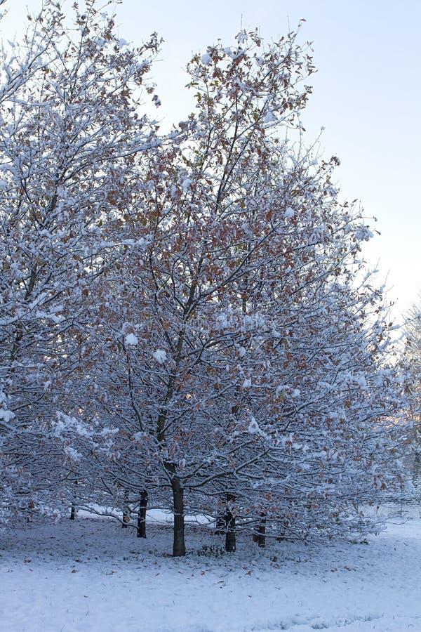 Cinisello Balsamo, les arbres couverts de neige dans le Grugnotorto se garent photographie stock libre de droits