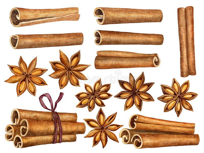 Cinnamon and anise stars set isolated on white background. Kitchen herbs and spices collection. Traditional christmas stock illustration