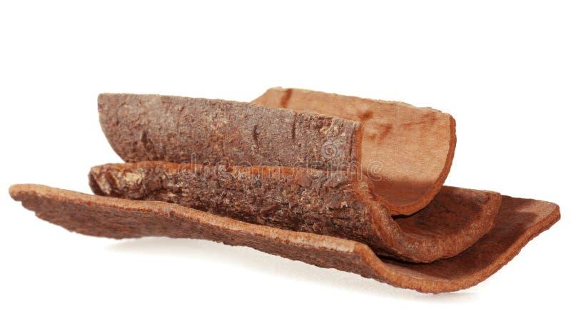 Cinnamon bark. Natural Dalchini. stock photo