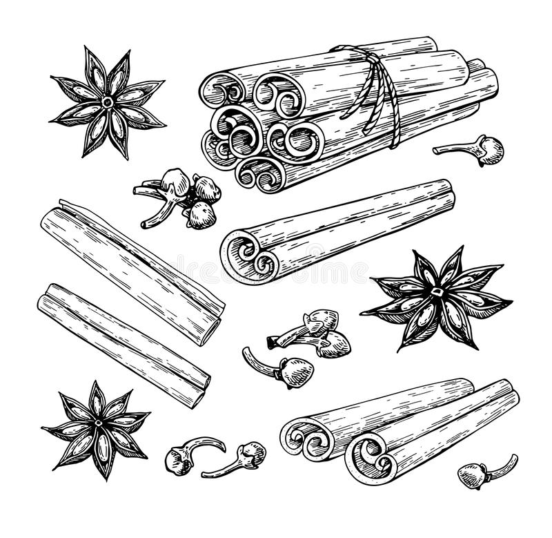 Cinnamon stick tied bunch, anise star and cloves. Vector drawing. Hand drawn sketch. Seasonal food. Illustration isolated on white. Engraved style spice and royalty free illustration