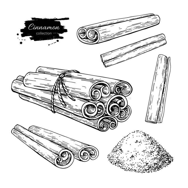 Cinnamon stick, tied bunch and powder set. Vector drawing. Hand drawn sketch. Seasonal food illustration isolated on white. Engraved style spice and flavor royalty free illustration
