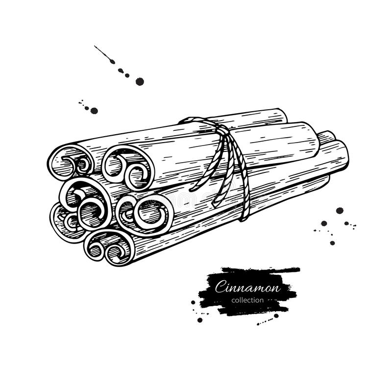 Cinnamon stick tied bunch Vector drawing. Hand drawn sketch. Sea. Sonal food illustration isolated on white. Engraved style spice and flavor object. Cooking and royalty free illustration