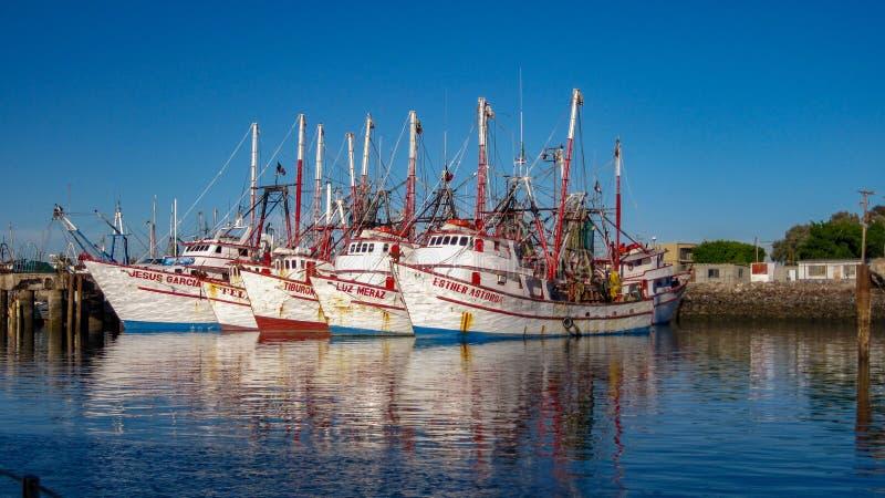 Cinq bateaux de crevette en Rocky Point Harbor, Mexique photos libres de droits