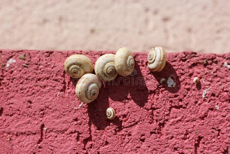 Download Cinq Escargots De Jardin Blancs Sur Un Mur Rose Photo stock - Image du escargot, bobine: 76078534