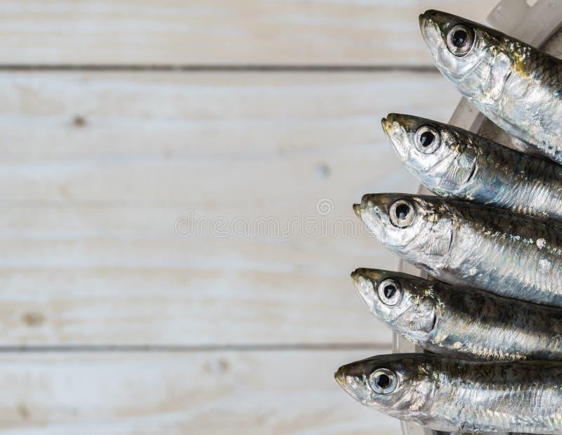 Cinq sardines photographie stock