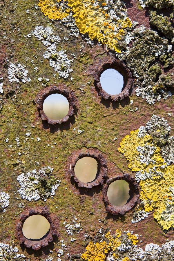 Cinq trous de balle dans un lichen superficiel par les agents ont encroûté le fond en métal photos stock