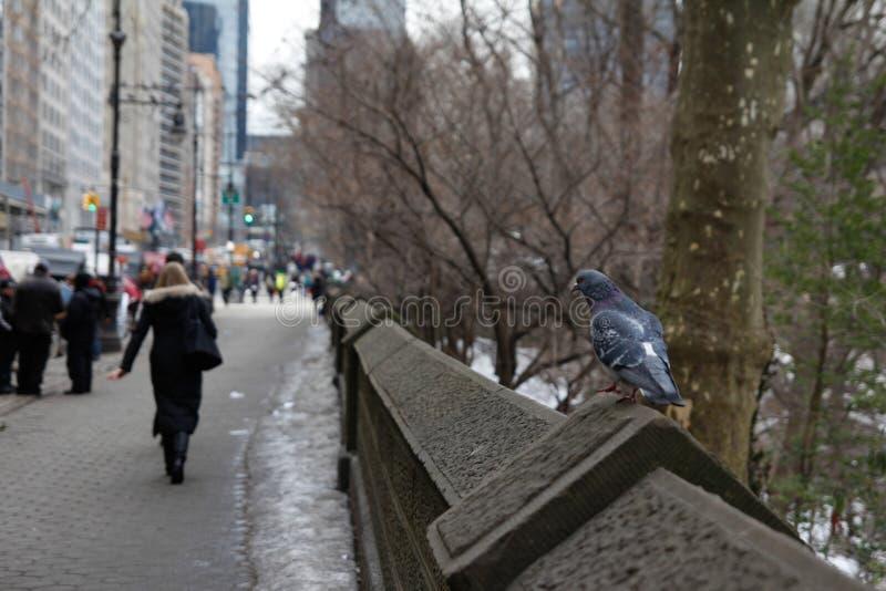 cinquantanovesima via NYC fotografia stock