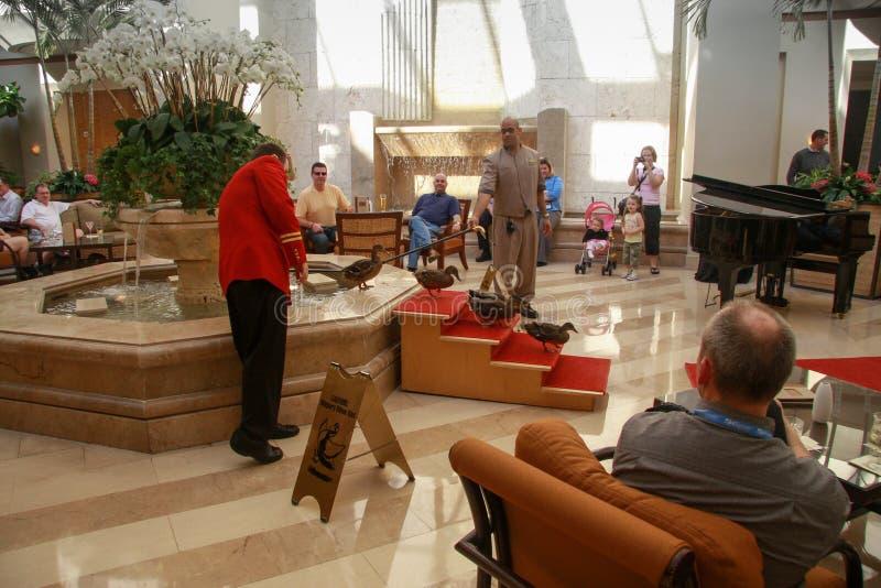 Cinque anatre che lasciano dalla fontana nell'hotel di Peabody fotografie stock libere da diritti
