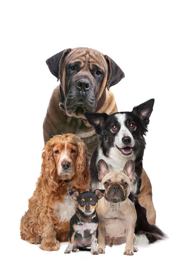 Cinque cani fotografia stock libera da diritti